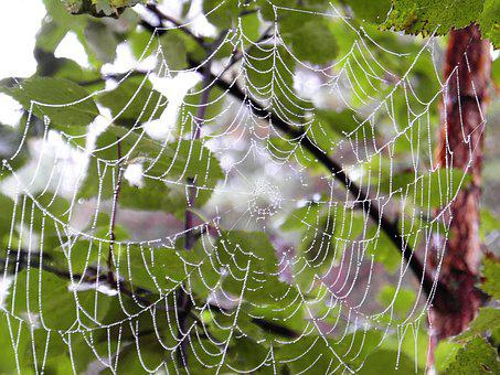 Summer, Spiderweb, The Dew, Nature, Cobweb, Droplets