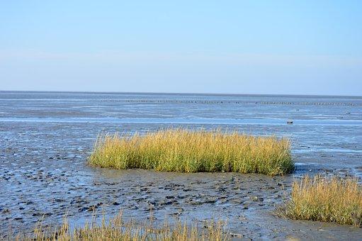 The Wadden Sea Of Schleswig-holstein, Friedrichskoog