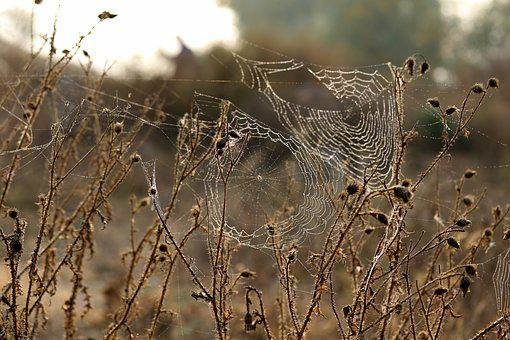 Spider Web, Brambles, Thorns, Dry, Autumn