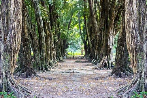 Landscape, Green, Tree, Tunnel, Nature, Forest, Prado