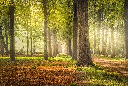 Lane, Trees, Beech, Nature, Landscape, Tree, Sky