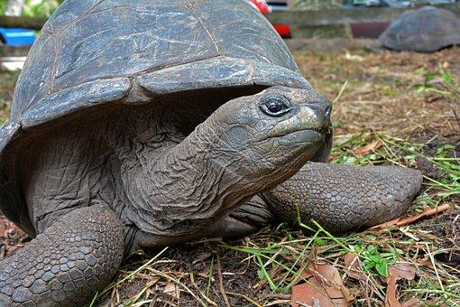 Seychelles, Tortoise, Turtle