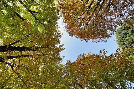Leaf, Tree, Nature, Wood, Season, Bright, Landscape