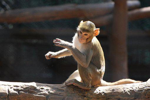 Monkey, Forest, Wildlife, Nature, Animal, Jungle, Zoo
