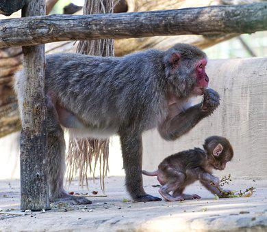 Monkey, Primate, Young Animal, Mammal, Animal World