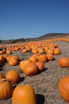 Pumpkin, Field, Autumn, Pumpkins, Farm, Orange, Blue