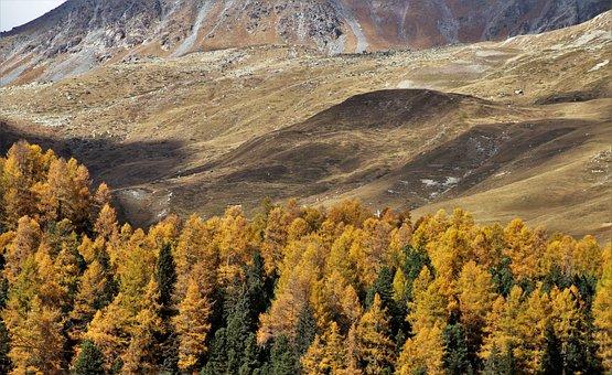 Autumn, Mountains, Tree, High, Larch, Red, Mountain
