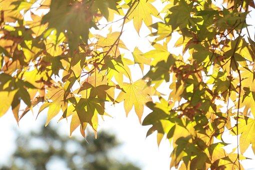 In Autumn, Leaves, Autumn Leaves, Autumn, Nature