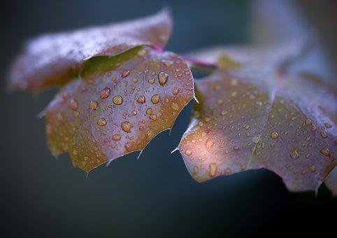 Autumn, Sonbahar, Macro, Soft Ptr, Bitki, Leaf, Nature