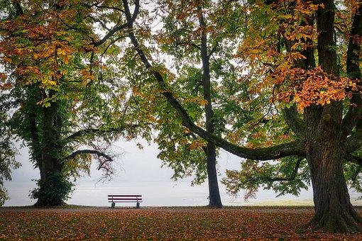 Autumn, Bank, Nature, Park, Leaves, Tree, Sit, Rest