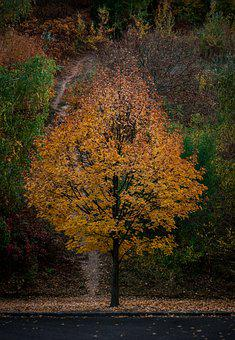 Tree, Autumn, Leaves, Nature, Forest, Landscape