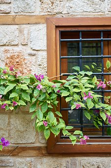 Balcony, Window, Flowerpot, Plant, Building, Home