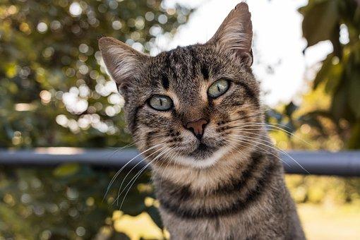 Cat, Malai, Animal, Kitten, Feline, Head, Home, Animals