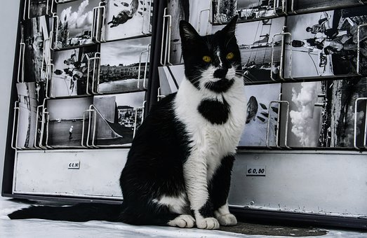 Cat, Black And White, Postcard, Contrast, Black, White