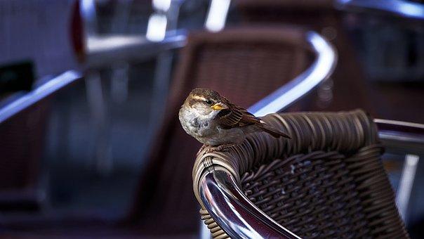 Birds, Chair, Bar, Bird, Flowers, Nature, Chairs