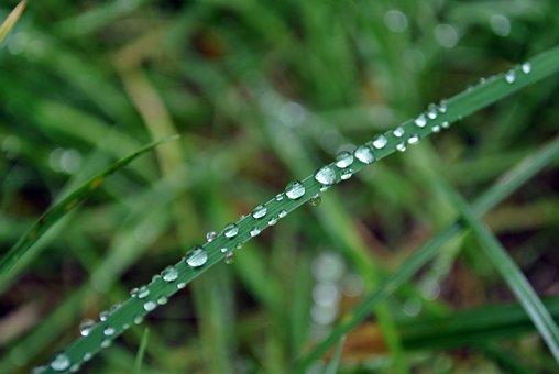 Dew, Drop Of Water, Dewdrop, Close Up, Beaded