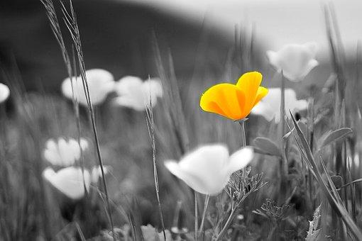 Nature, Flowers, Field, Yellow