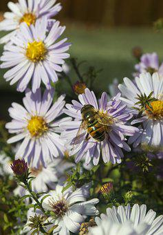 Floral, Bee, Fly, Flower, Nature, Bloom, Pollen, Plant