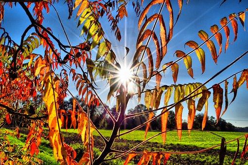 Autumn, Golden Autumn, Autumn Mood, Fall Foliage