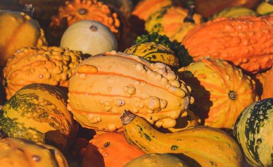 Squash, Fall, Pumpkin, Decoration, Halloween, Colorful