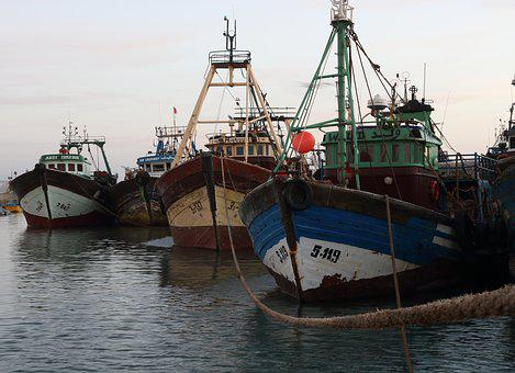Morocco, Essaouira, Harbor, Fishing, Boat, Seagull, Net