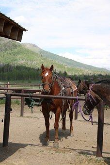 Horse, Horseback, Riding, Nature, Equestrian