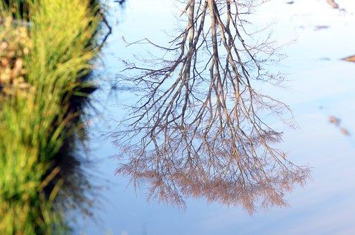 Jeseniky, Calamity, Forests, The Jeseníky Mountains