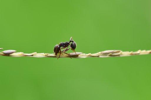 Ant, Karınca, Macro, Wallpaper, Wild, Nature, Doğa