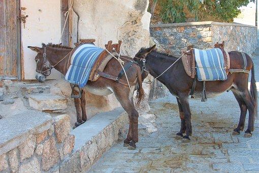 Donkey, Load Donkey, Grey Animals, Beasts Of Burden