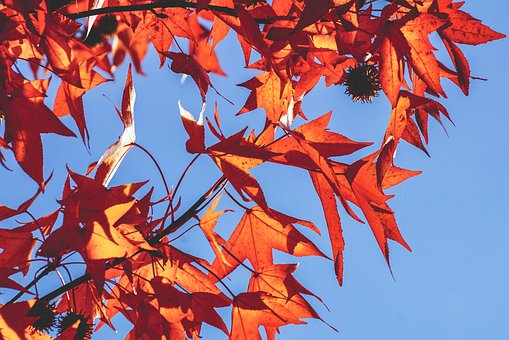 Autumn, Leaves, Fall Color, Red, Tree, Mood, Bright