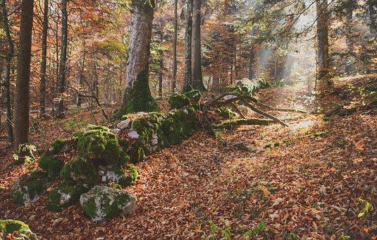 Forest, Fall, Trees, Wall, Pierre, Foam, Green, Tree