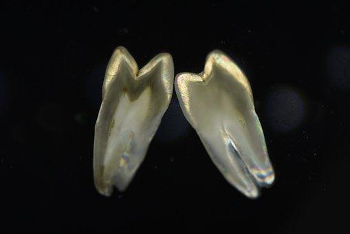 Polarized Shooting, Teeth, Section
