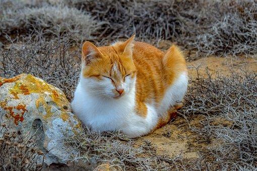 Cat, Stray, Animal, Cute, Looking, Portrait, Kitten