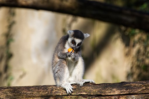Monkey, Primate, Mammal, Animal World, Zoo, Animal