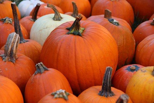 Pumpkin, Fall, Autumn, Halloween, Orange, October