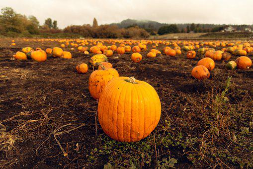 Cloudy, Farm, Field, Mountain, Patch, Pumpkin, Pumpkins