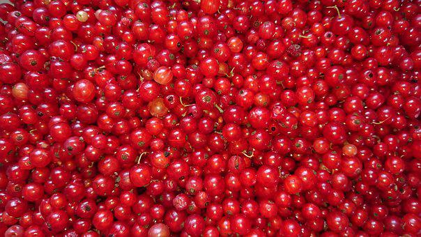 Currant, Berry, Nature, Sheet, Food, Red, Red Berry