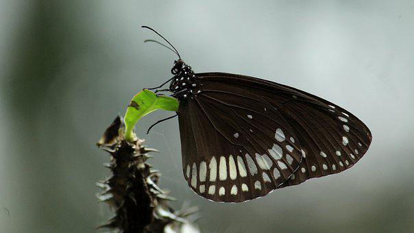 Butterfly, Insect, Black, White, Green, Sitting