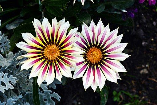 Blossom, Bloom, Flower, Nature, Plant, Petals, Summer