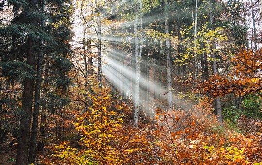 Forest, Radius, Light, Sun, Fall, Landscape, Trees