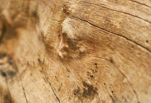Wood-fibre Boards, Timber, Wood, Texture, Pattern