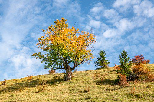 Landscape, Tree, Fall Color, Sunlight, Mood