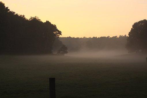 Foog, Trees, Late Summer, Sky, Himmel, Sunset