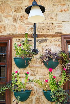 Window, Flowerpot, Wall, Flower, Home, Plant, Nature