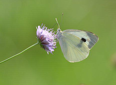 Butterfly, Macro, Kelebek, Wild, Nature, Doğa, Bitki