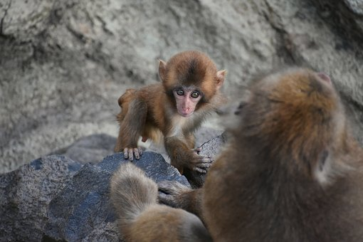 Animal, Park, Monkey