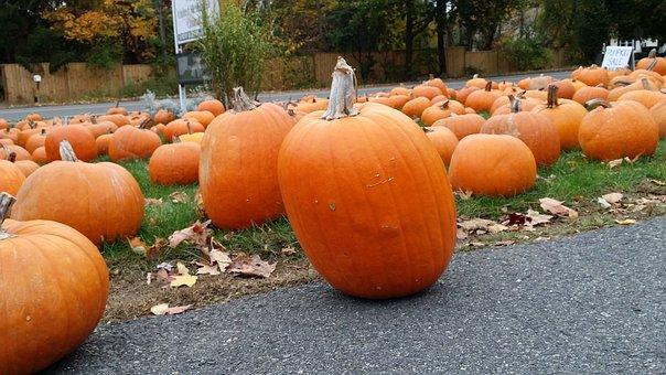 Pumpkin, Halloween, Autumn, Orange, Pumpkins