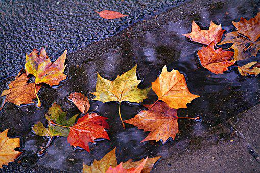 Autumn Leaf, Colorful, Autumn Color, Puddle, Water