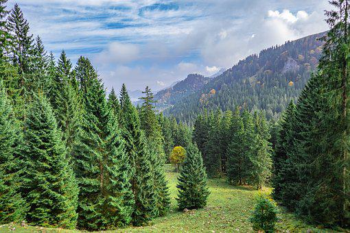 Landscape, Forest, Trees, Mountains, Bavaria