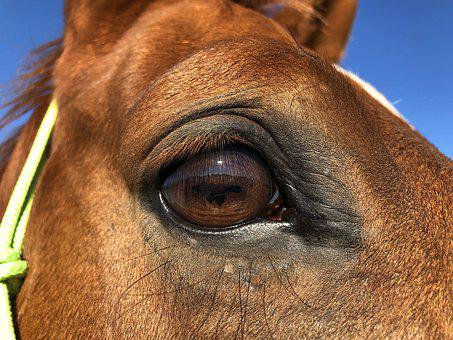 Horse, Eye, Look, Reflection, Eyelashes, Brown, Sun